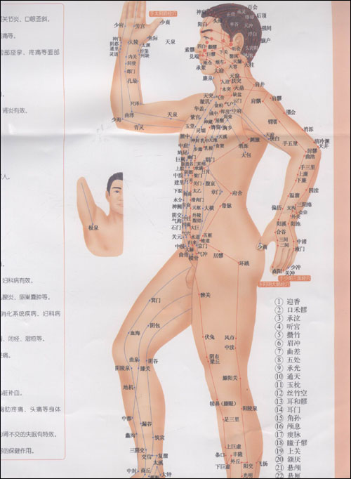 人体经络穴位按摩挂图