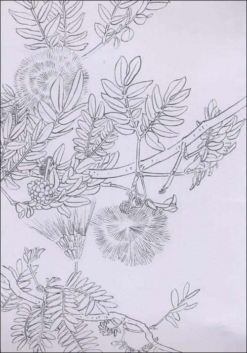 简笔画 手绘 线稿 500_713 竖版 竖屏