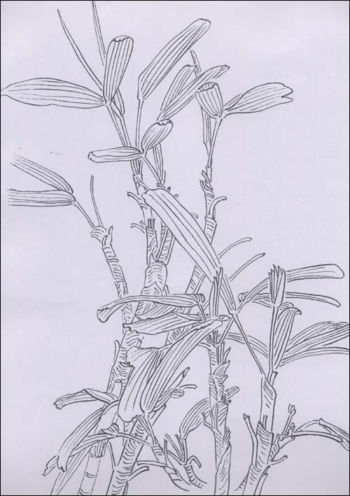 钢笔手绘玻璃_手绘漫画学习_古风手绘_手绘壁纸 .