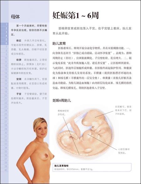 受孕、怀孕及分娩