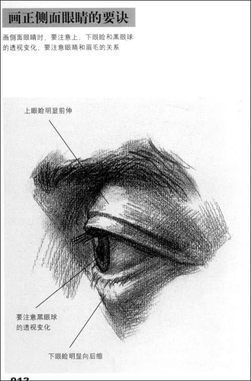 素描中鼻子的画法带图教程  胃结构正面解剖图_鼻子的结构图解_素描