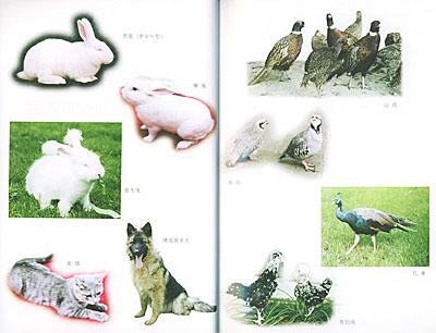 庭院经济动物高效养殖新技术大全
