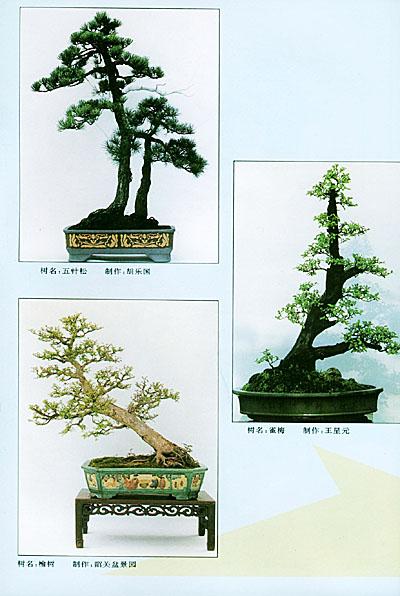 介绍树木盆景造型的构思设计与制作技巧图片