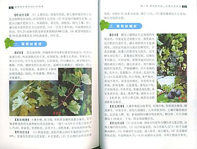 《葡萄病虫害防治彩色图谱》 张翠疃, 李大乱【摘要