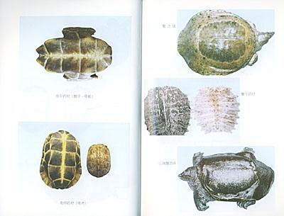 二 原动物考证     第二节 分类地位       一 龟鳖目分科检索