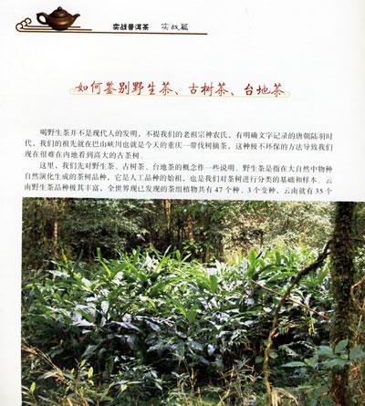 实战普洱茶(附光盘)/杨凯-图书-亚马逊中国