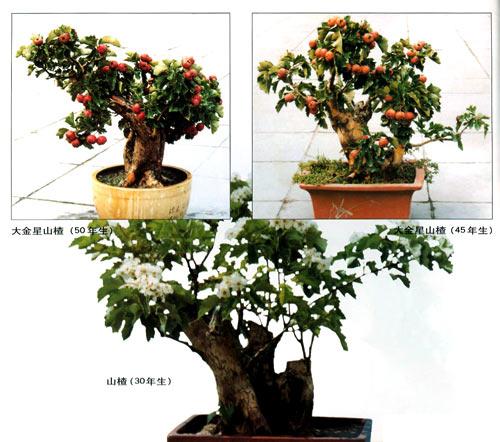 《果树盆栽与盆景技艺》 王兆毅【摘要 书评 试读】