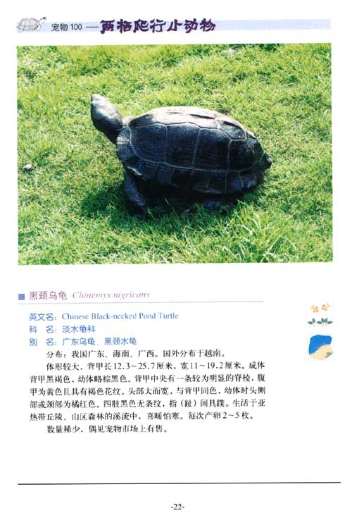 两栖爬行小动物/张斌-图书-亚马逊