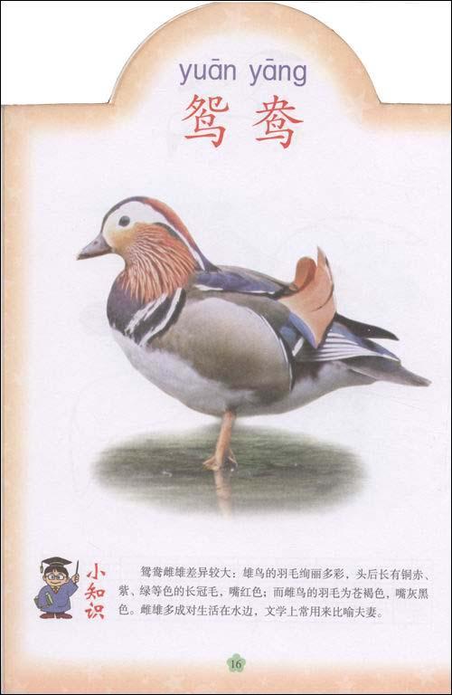 《看图识字画百科(鸟类乐园)》编写形象生动,书中图文并茂,每一种动物