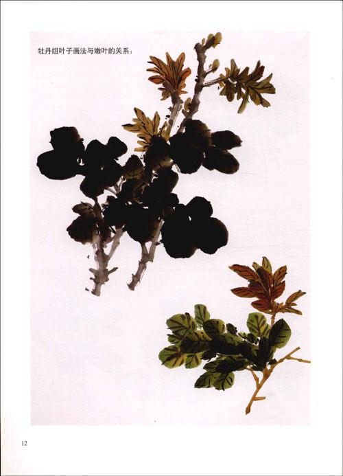 牡丹概述 叶子的画法 牡丹组叶子画法与嫩叶 高清图片