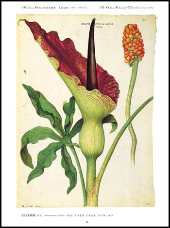 文艺花卉植物素材