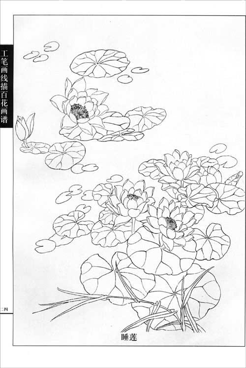 工笔画线描百花画谱:春夏篇:亚马逊:图书