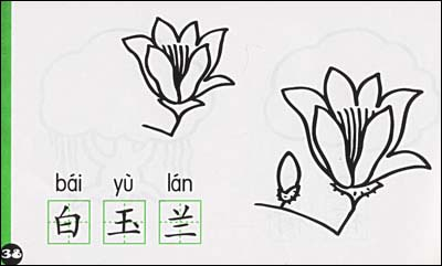 幼儿园植物简笔画:太阳花