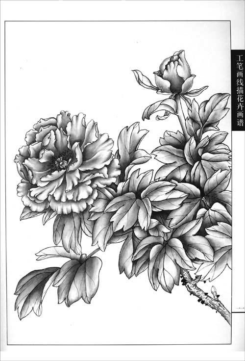 《工笔画线描花卉画谱:牡丹篇》