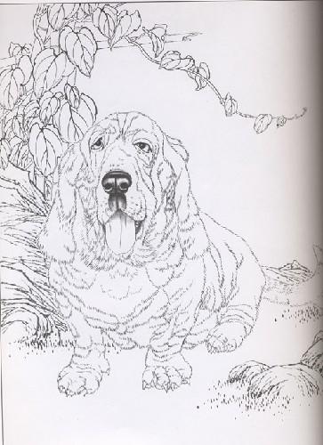 蝴蝶犬铅笔画手绘图片