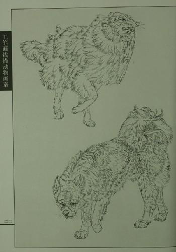 狗为人类饲养的历史很长,是世界上最广泛饲养的动物之一.