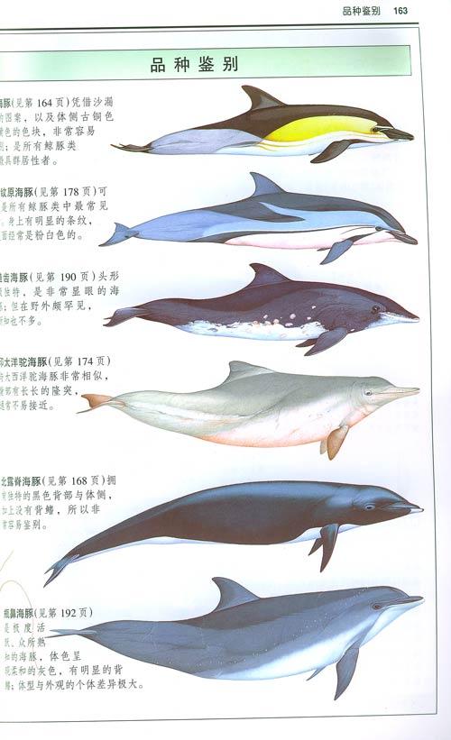 鲸与海豚:全世界79种鲸与海豚的彩色图鉴