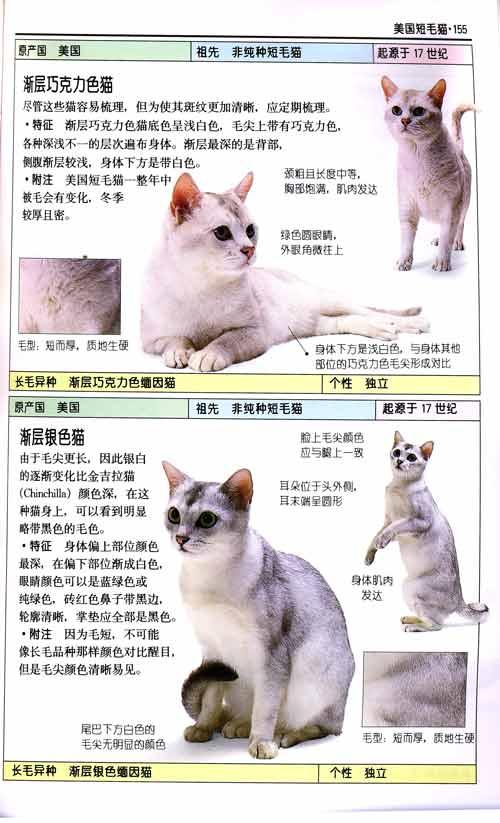 自然珍藏图鉴丛书:《猫》[平装]