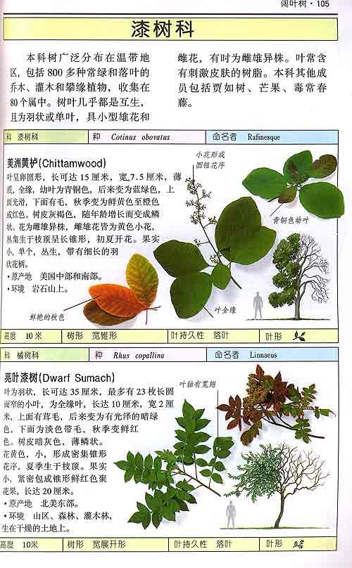 经典图鉴珍藏:《药用植物》