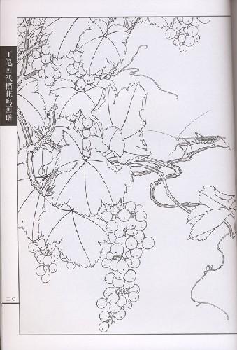 今存葡萄画迹仅见一本,系南宋林椿《葡萄草虫图》.图片