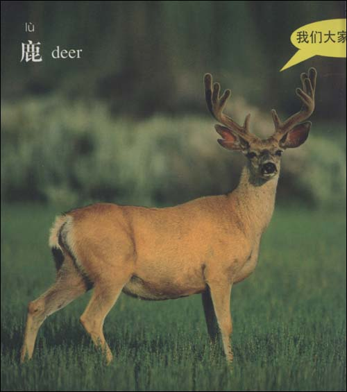 有趣的动物:陆地上的动物/稚慧-图书-亚马逊