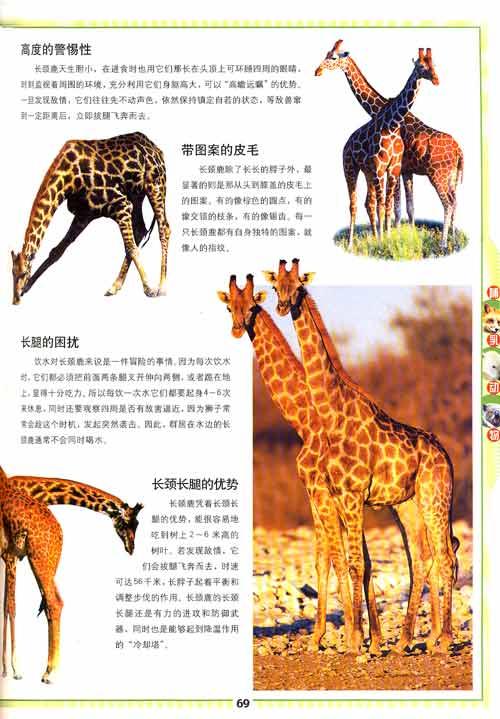 回至 彩书坊:动物百科 (精装)
