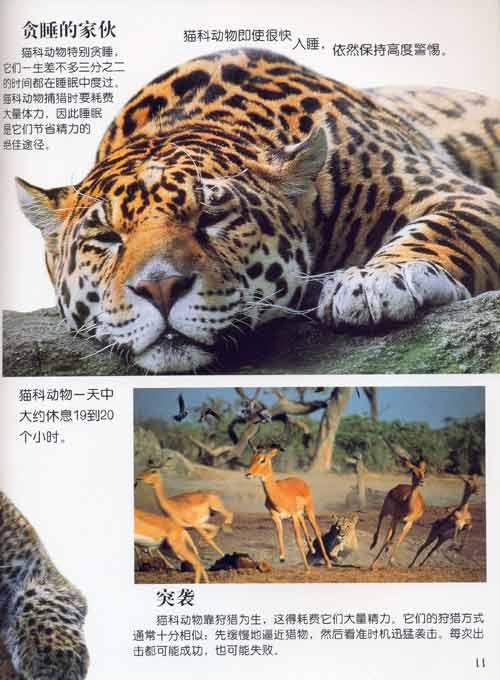 视觉奇观:猫科动物/童趣出版有限公司-图书-卓越亚马逊