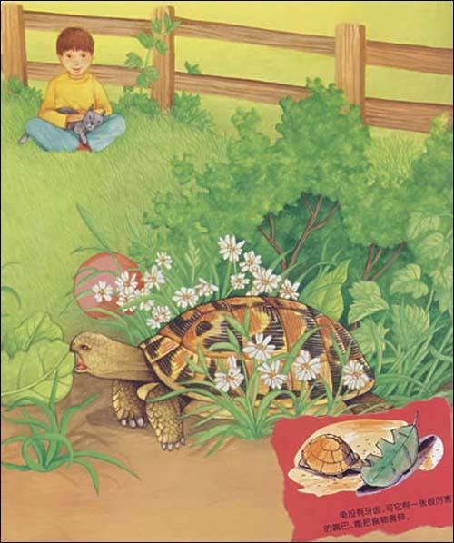 一系列相关物种的种类比参照,《慢吞吞的爬行者:龟让小朋友与小动物