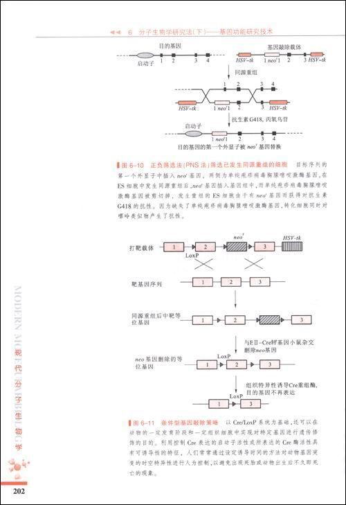 """普通高等教育""""十一五""""国家级规划教材•现代分子生物学"""