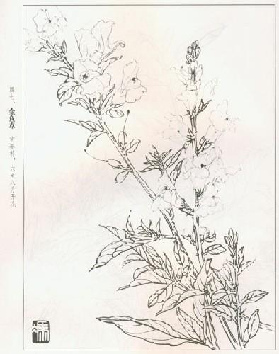 国画 简笔画 手绘 线稿 394_500 竖版 竖屏