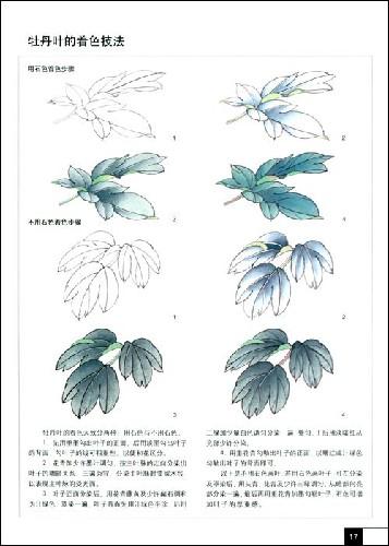 王少卿工笔牡丹画法 工笔牡丹画法视频 工笔牡丹叶子的画法 高清图片