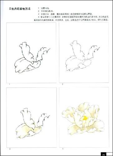 现代工笔牡丹画法