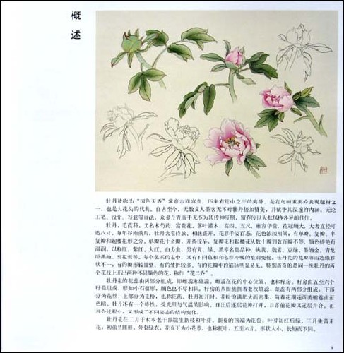 工笔五色牡丹画法图片