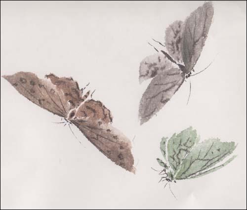 美女简笔画 捕蝴蝶的小