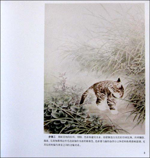 工笔猫画法 二图片