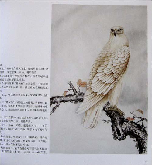 九岁开始临摹连环画,1993年随傅义聪老师学习素描,国画花鸟,1998年