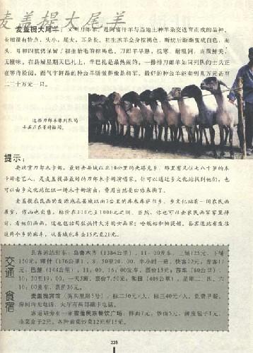新疆盛宴:亚洲腹地自助之旅