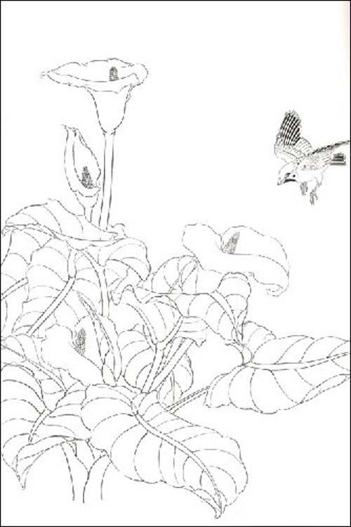 玉兰花素描图片