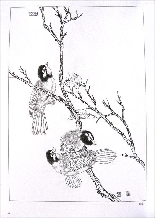 麻雀 小燕子