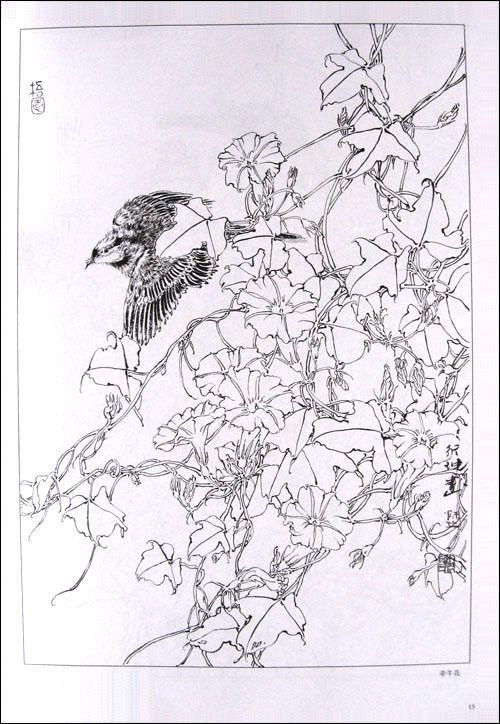 师行坤; 白描花卉万种_俞致贞白描花卉_工笔白描花卉图片_图片素材库