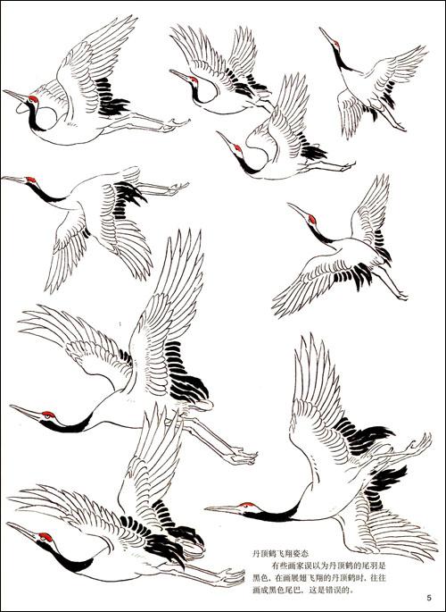 工笔丹顶鹤技法图片