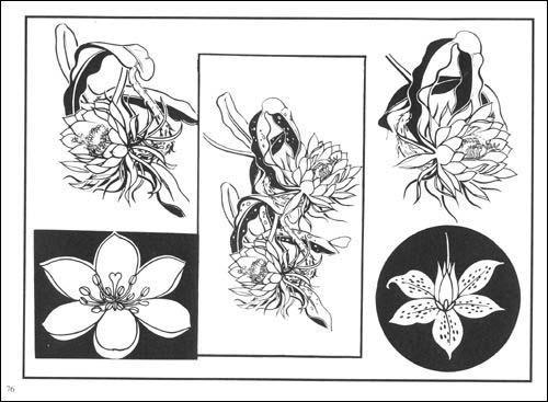 红花-(艹乐)草 鹿蹄草