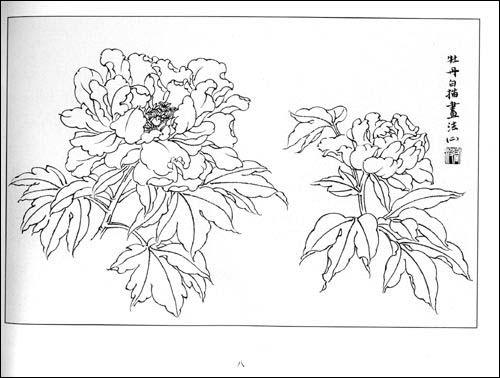 牡丹花铅笔手绘