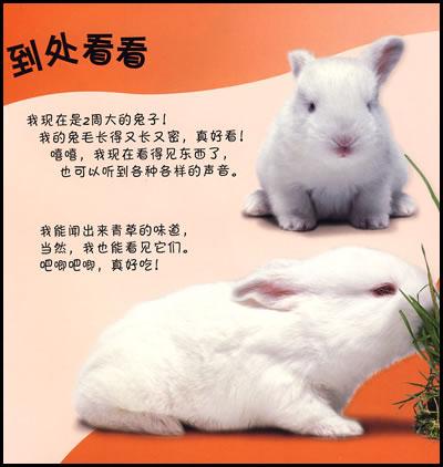 小兔子》里不仅有清晰的图片和亲切的文字,还有一整页漂亮的