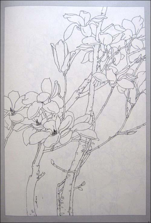 卓越手绘室内盆栽黑白线稿