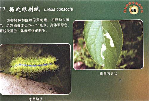 目录 杏,李树主要病害及防治