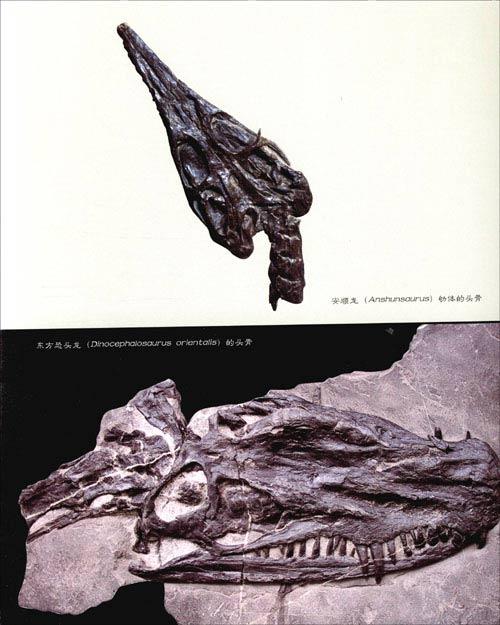 《畅游在两亿年前的海洋:华南三叠纪海生爬行类和环境