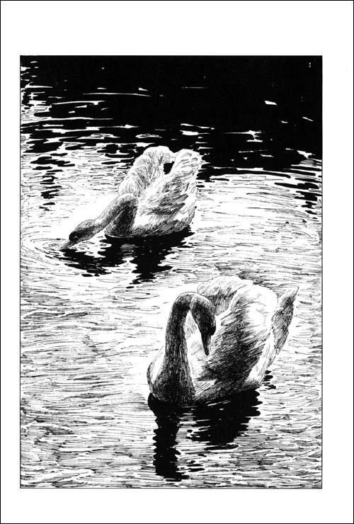 动物小说大王沈石溪品藏书系:鸟奴