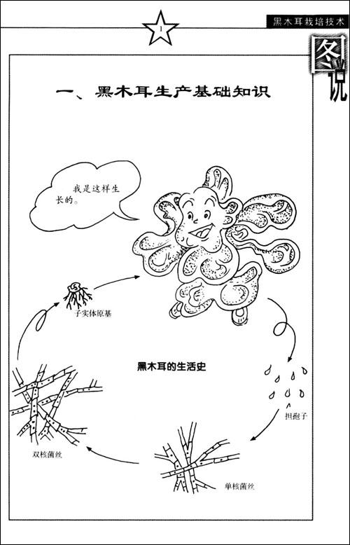 植物木耳手绘插画