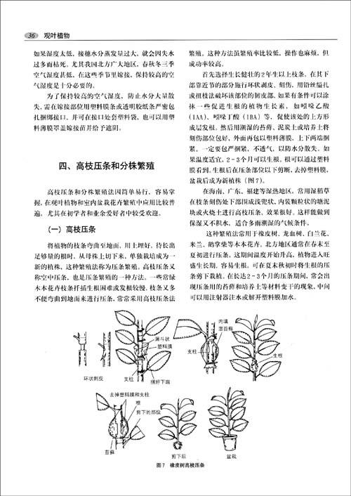 凤尾蕨  独蒜兰